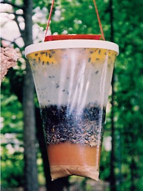 Flies Be Gone - How to Get Rid of Flies - Natural Fly Trap ...
