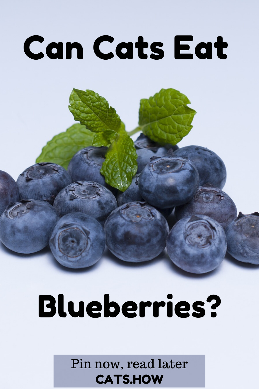 Can Cats Eat Blueberries in 2020 Eat, Healthy fruits