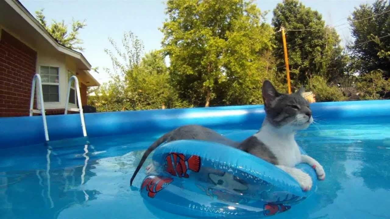 cat swiming and floating in pool ( GoPro Hero ) GATTI