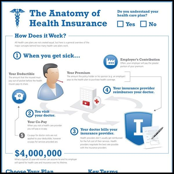 Anatomy Of Health Insurance Infographic Anatomy Health