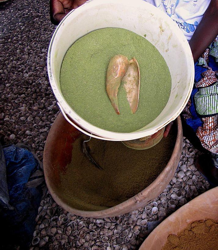 Cymbium marmoratum shell scoop for lalo - baobab green leaf powder.jpg
