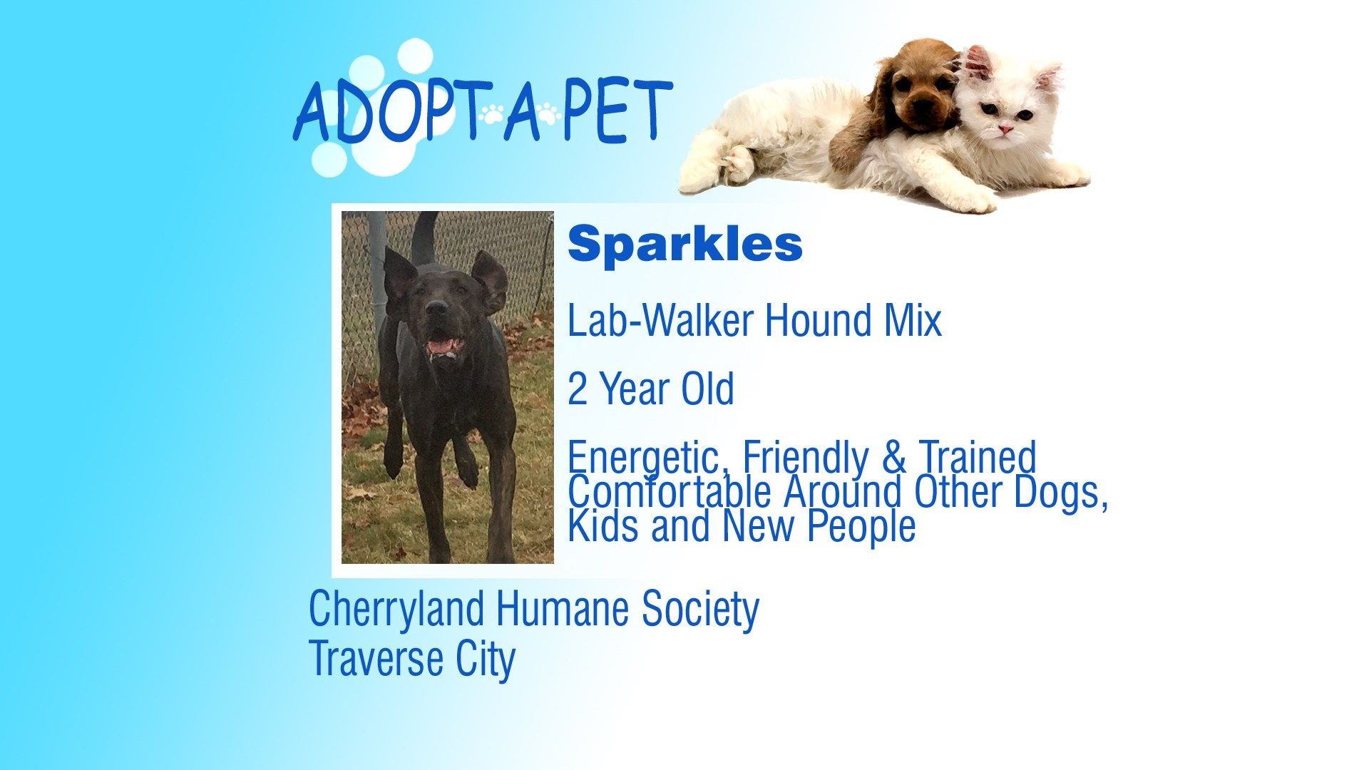 Adopt a Pet Tuesday Sparkles, Findley, and Double the Fun