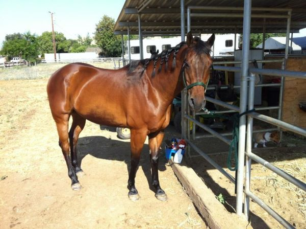 Registered Appy Gelding He Is For Sale 1900 And Knows Barrels Awesome Trail Horse Horses Gelding Animals