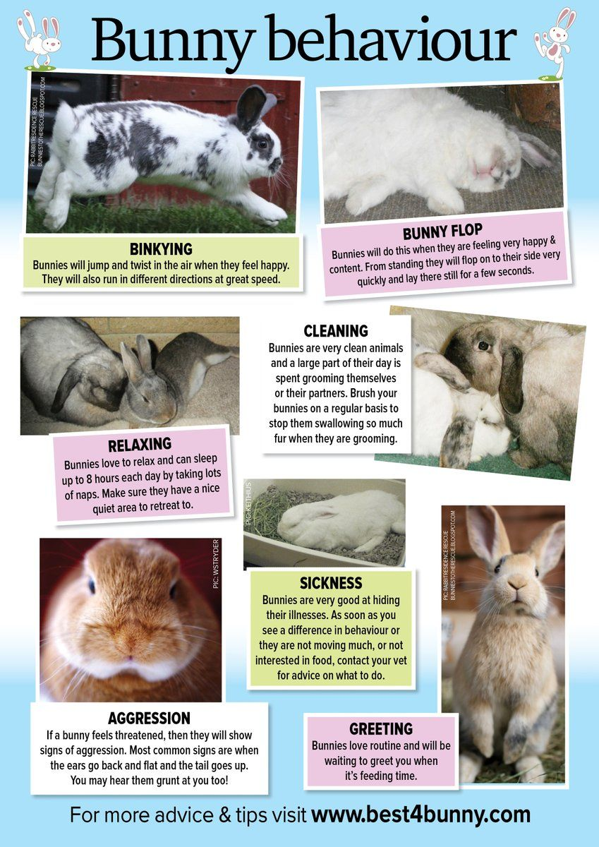 Best4bunny on Twitter Pet bunny rabbits, Pet rabbit care