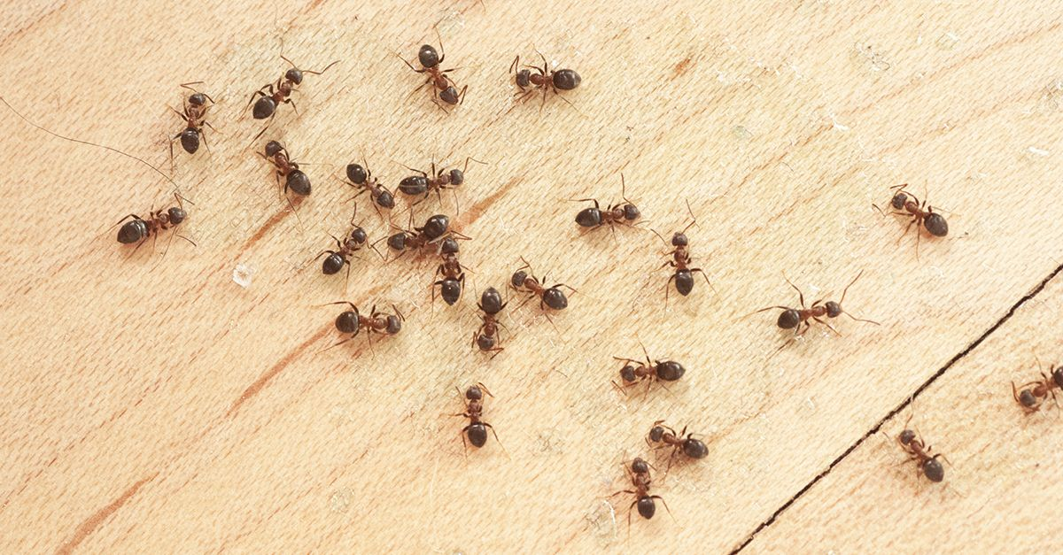 how to get rid of crane flies in house
