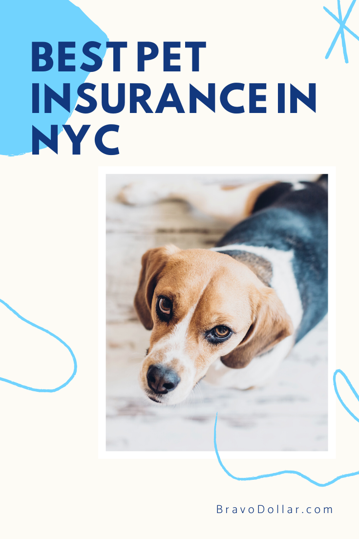 Are You A Pet Owner Living In New York City In Our Comparison Shop We Found That Pet Owners Have The Choice Between A Comprehensiv Best Pet Insurance Pets Dog Insurance