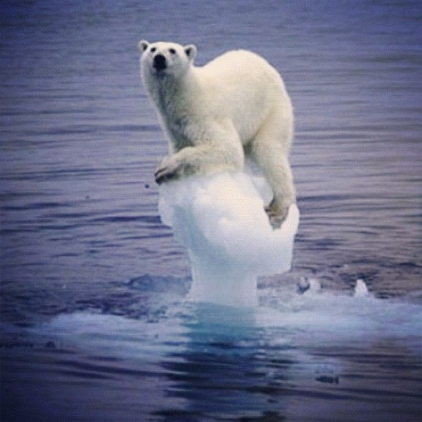 DEPLETING POLAR ICE IS A SAD SIGN FOR THEM.