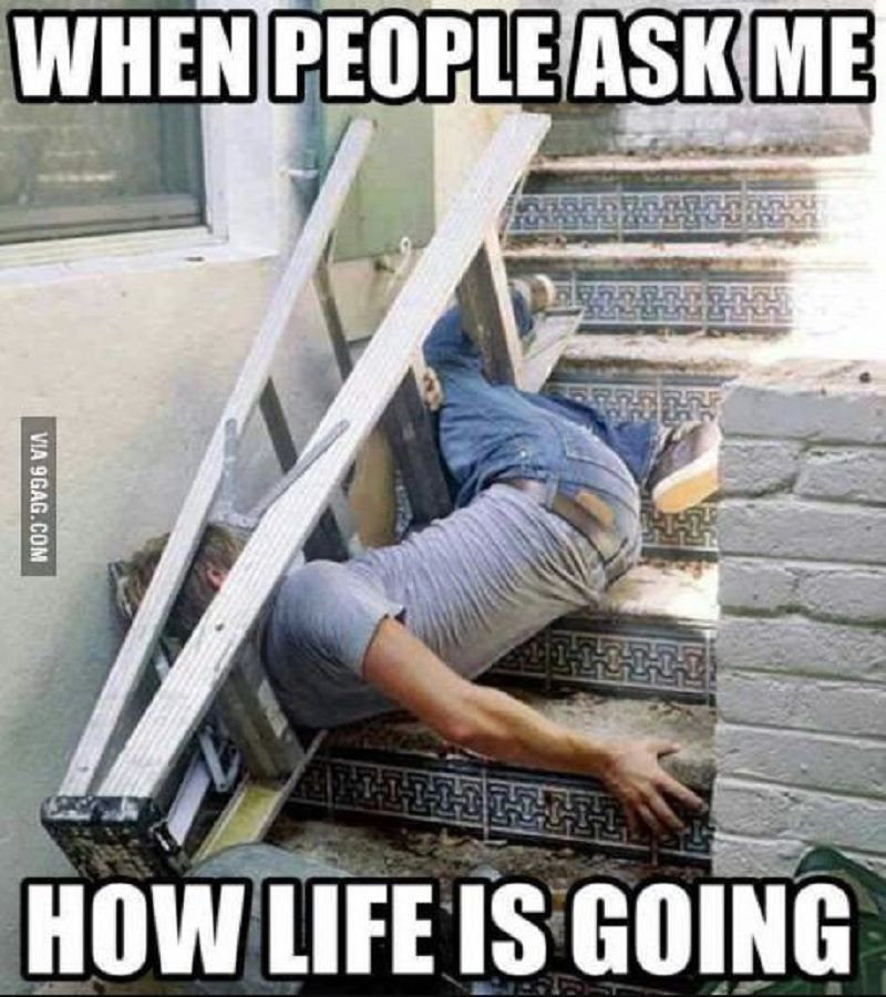 Yeah I Have A Few Goals In Life That I M Reaching Similar To This Lmao Life Goals Memes Anedotas Funny Piadas