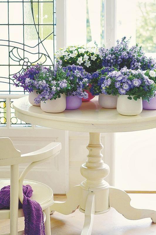 jardin-marzo.Las flores son esenciales en nuestra decoración.Esta se llama campánula y es de este mes, aporta mucha alegría tanto en interior como exterior.