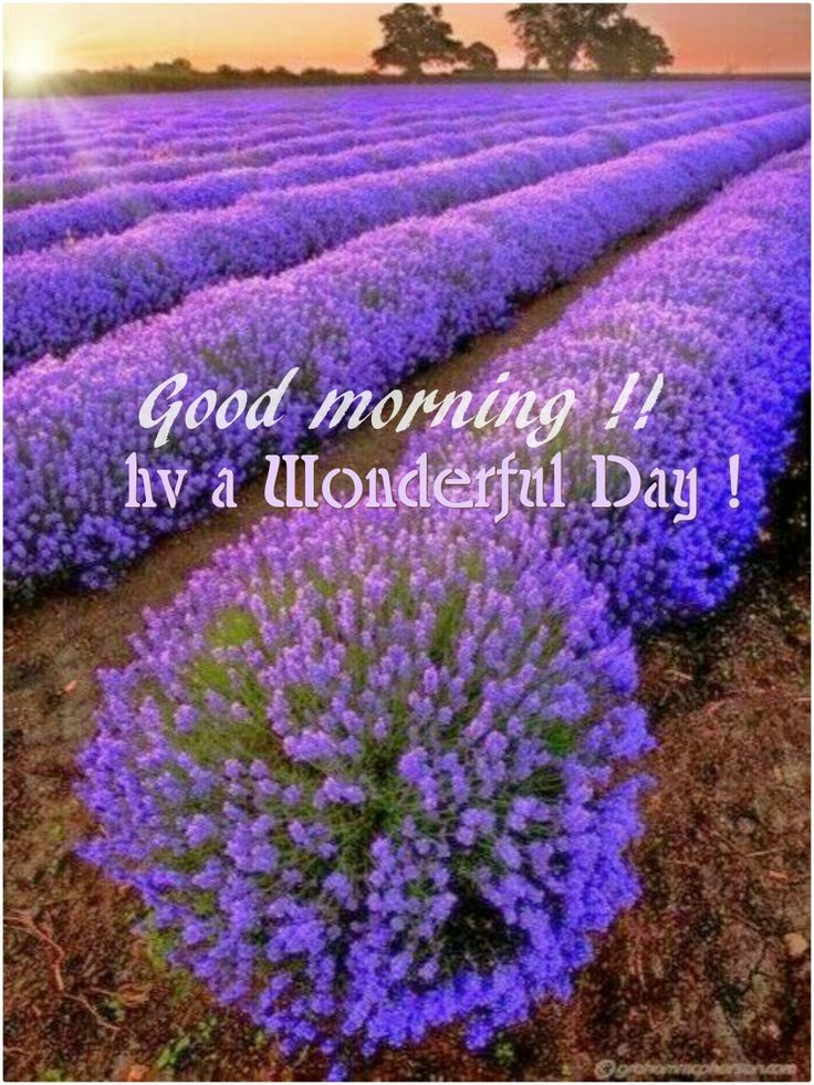 Moin Moin Good morning greetings, Good morning quotes