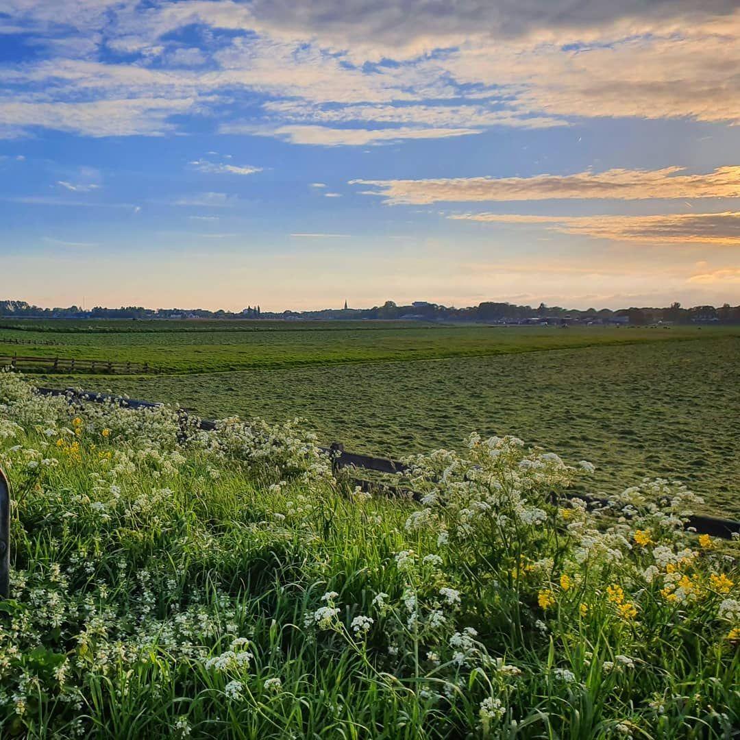 Almost summer green grass field sky horizon