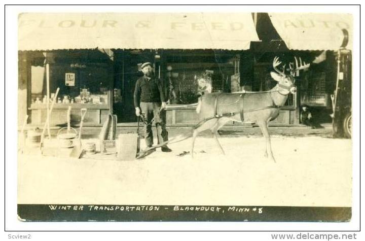RP: Black Duck, Minnesota, 00-10s   Winter Transportation,Feed storefront, Man &  stuffed  deer with sled