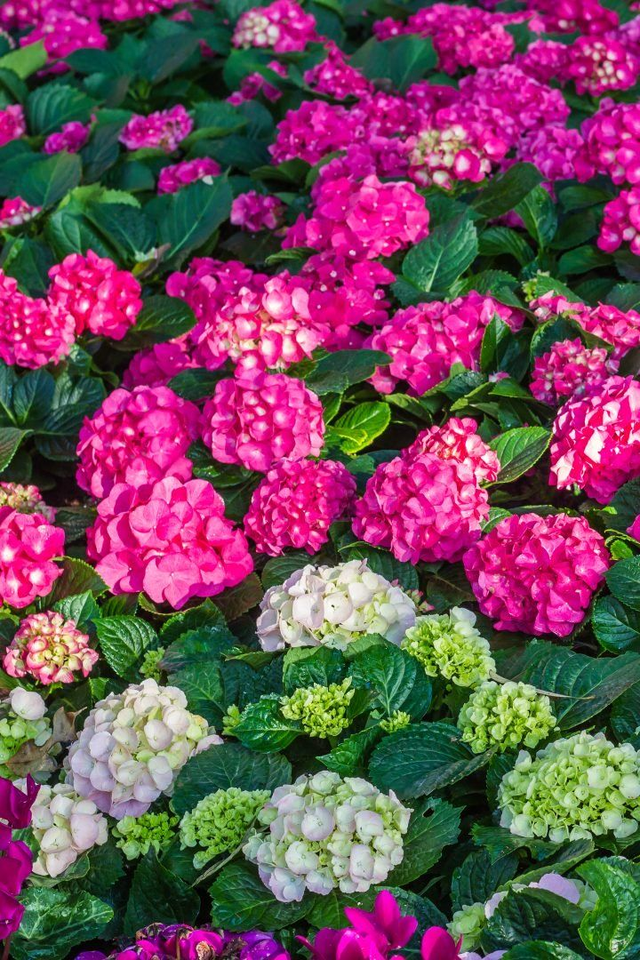 The Best Online Nurseries (Where To Buy Perennials, Trees