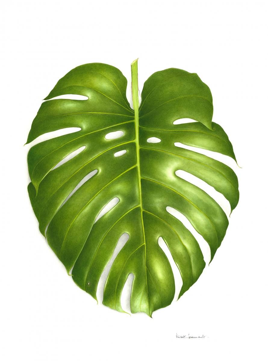 philodendron monstera art pinterest tableau et id e. Black Bedroom Furniture Sets. Home Design Ideas