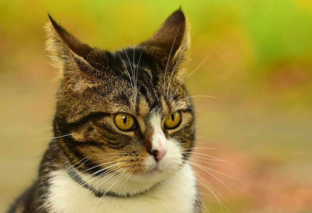 Like Comment And Share It If You Think It S Fantastic Cat
