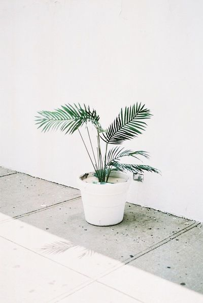 white and green interiors #plant life #nature #accents