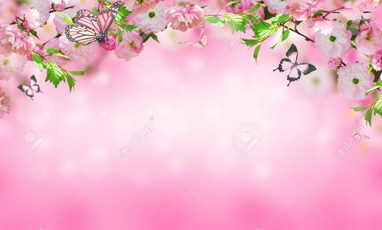 Flowers background with amazing spring sakura with butterflies. Flowers of cherries. ,