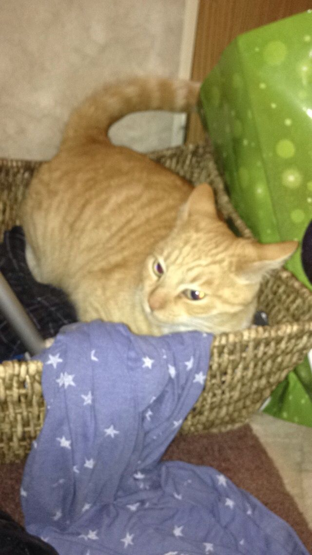 My cat in the basket