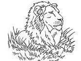 Mammals of India: lion coloring pages
