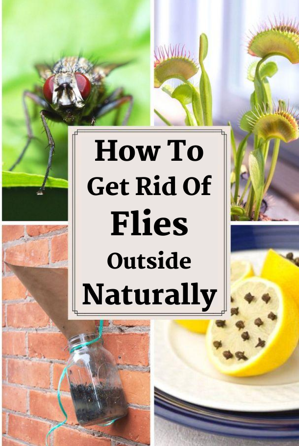 How To Get Rid Of Flies Outside Naturally -   18 how to get rid of flies outside ideas