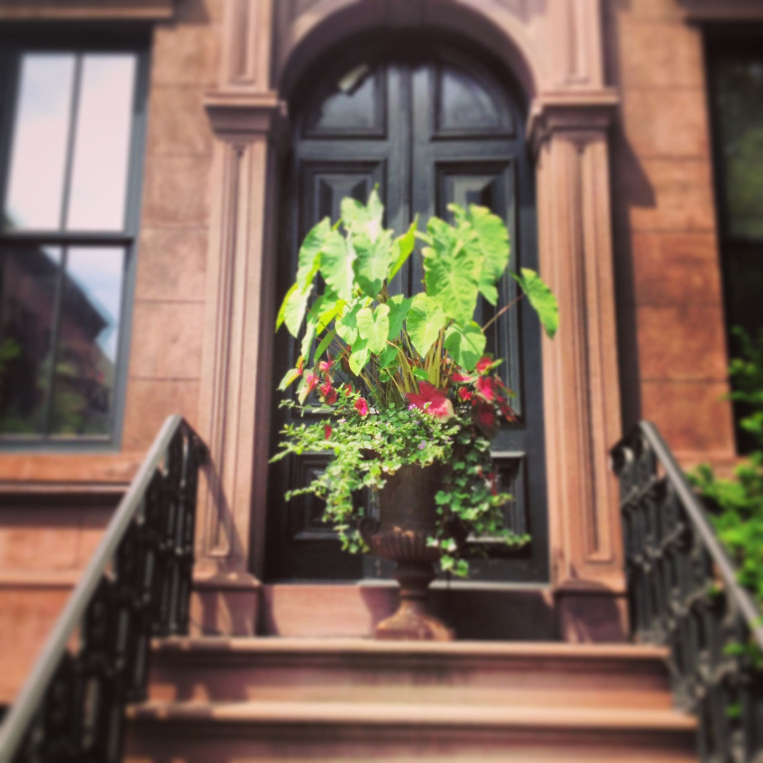 West Village Townhouse - beautiful urn planting. Corner of Charles & West 4th Streets, NYC.