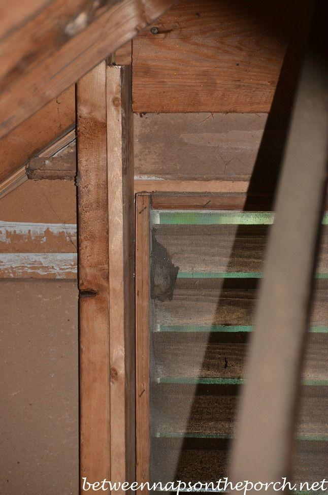 Keep Bats Critters From Entering Attics With Screening Attic Bat Gable Window