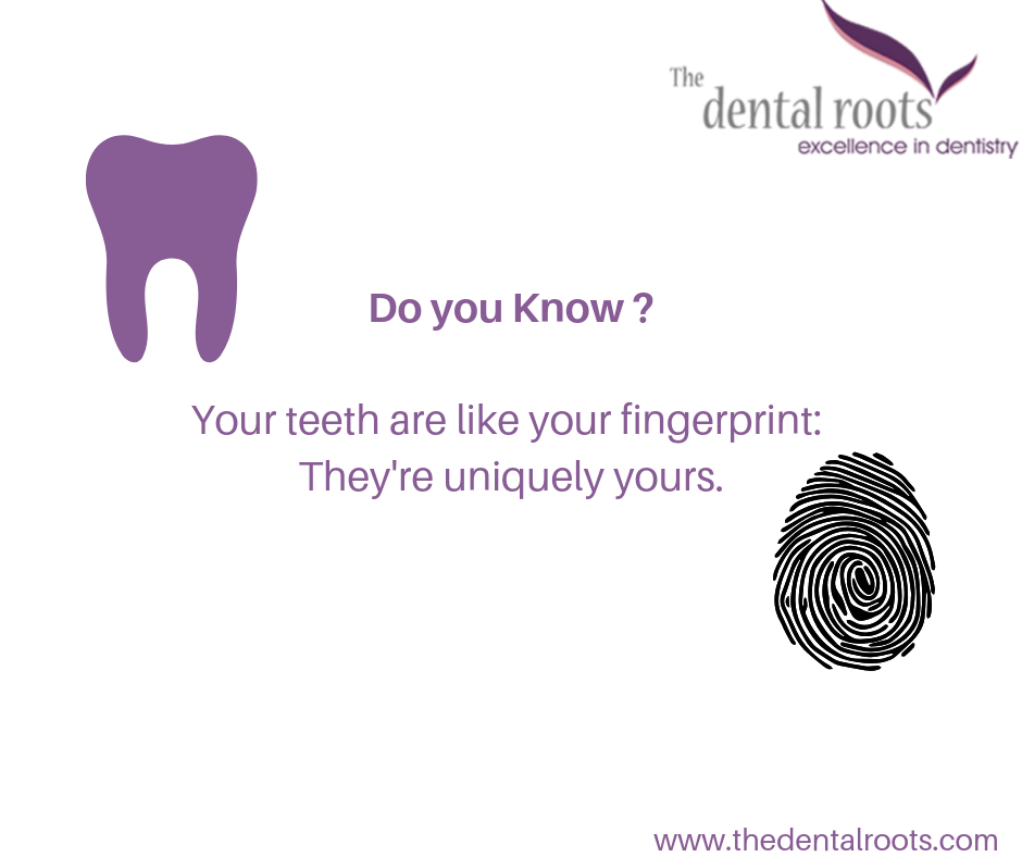 The Dental Roots (With images) Dental facts, Dental