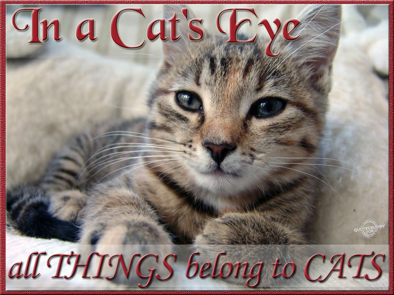 Quotes About Cats In A Cat's Eye All Things Belong To Cats  Kitty Stuff