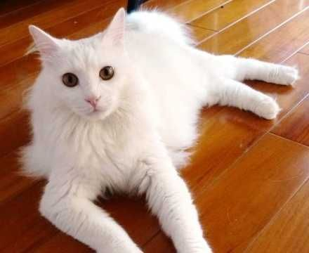 Scary Cute Meet Bai Bai Second Chance Animal Aid Shanghai S Pet Of The Month Cats Animals Pets