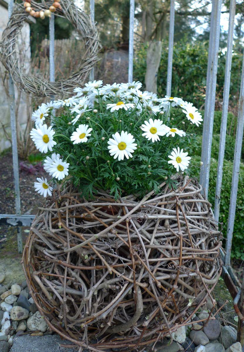Photo of Rebenkugel zum Bepflanzen – Karin Urban – NaturalSTyle
