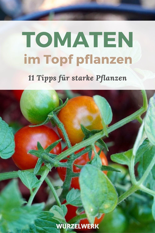 Tomaten Im Topf Pflanzen Die 11 Wichtigsten Schritte Wurzelwerk In 2020 Tomaten Im Topf Pflanzen Tomaten Pflanzen