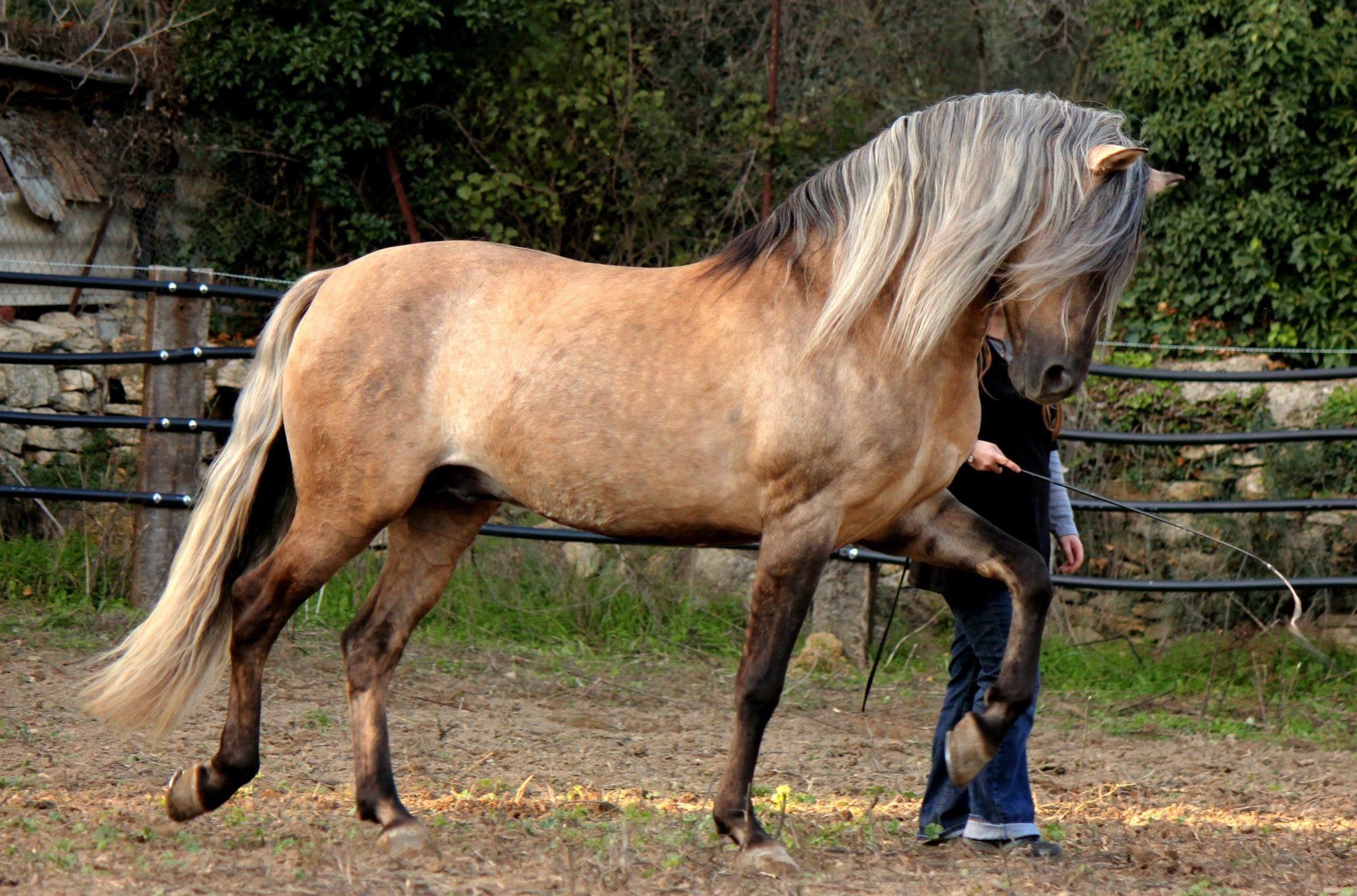 cool horse names - HD1200×793
