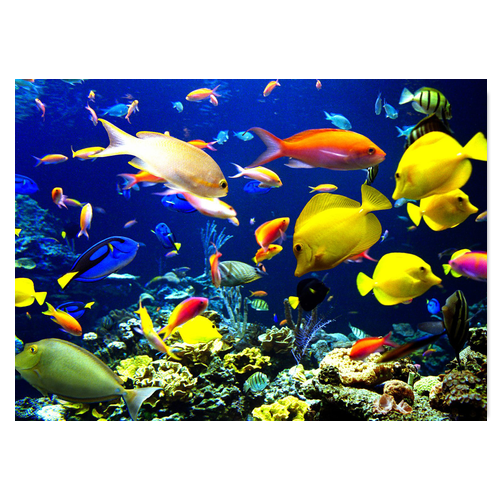 Various Fish Under The Sea Jigsaw Puzzle. Do You Like The