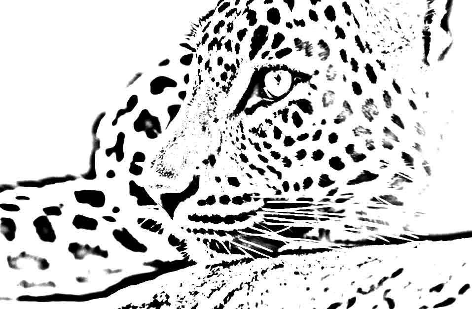 leopardcoloringpage.jpg (957×627) Coloring Pages