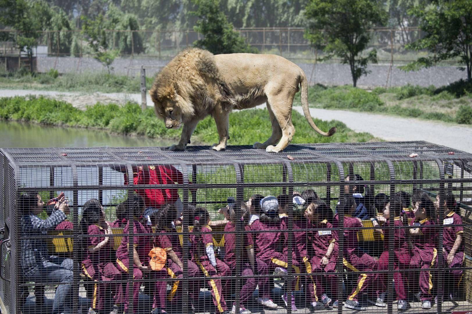 Dagens pletskud: Tør du besøge denne Zoo? | Nyhederne.tv2.dk