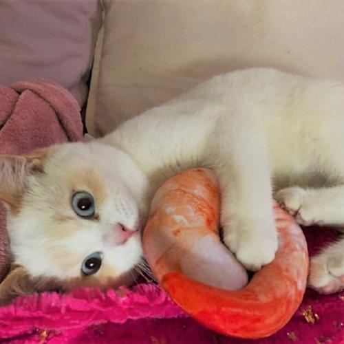 Nom Nom Toys Catnip Cat Toy Kittens Cutest Cat Toys