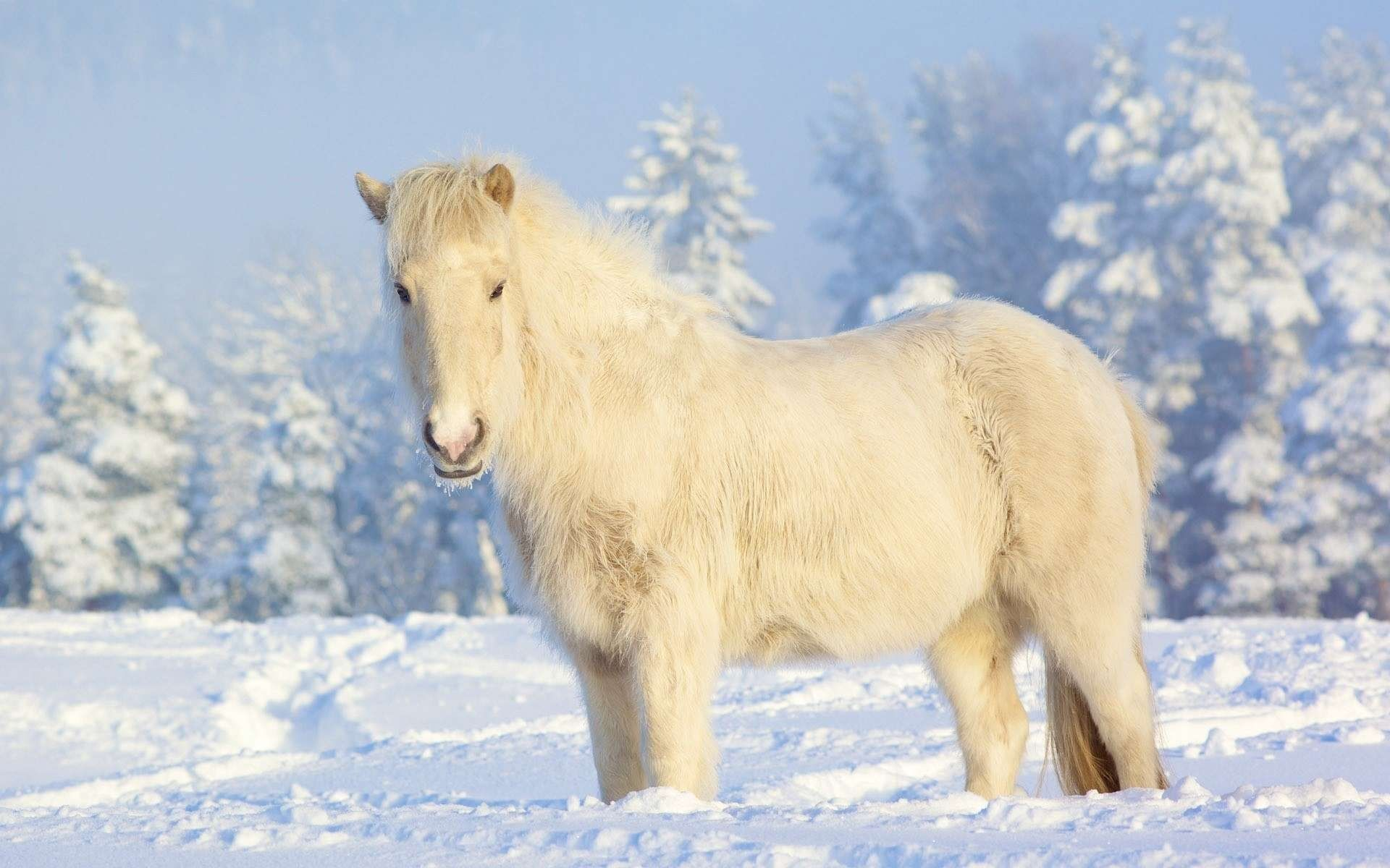 Top Wallpaper Horse Winter - fa6590e1a2f0eef186c21413fb6447ef  Graphic_394274.jpg
