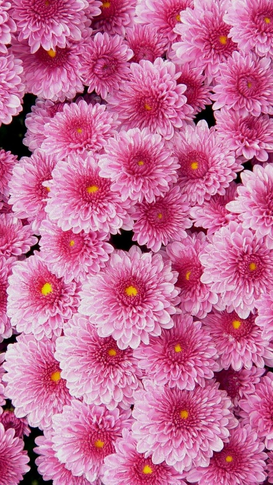 Pink Flower Wallpaper For Phone Pink Flowers Wallpaper Flower