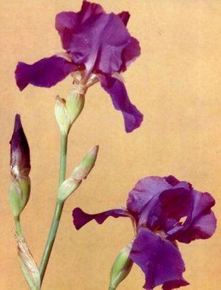 Наращивание ресниц какие виды бывают и название 17