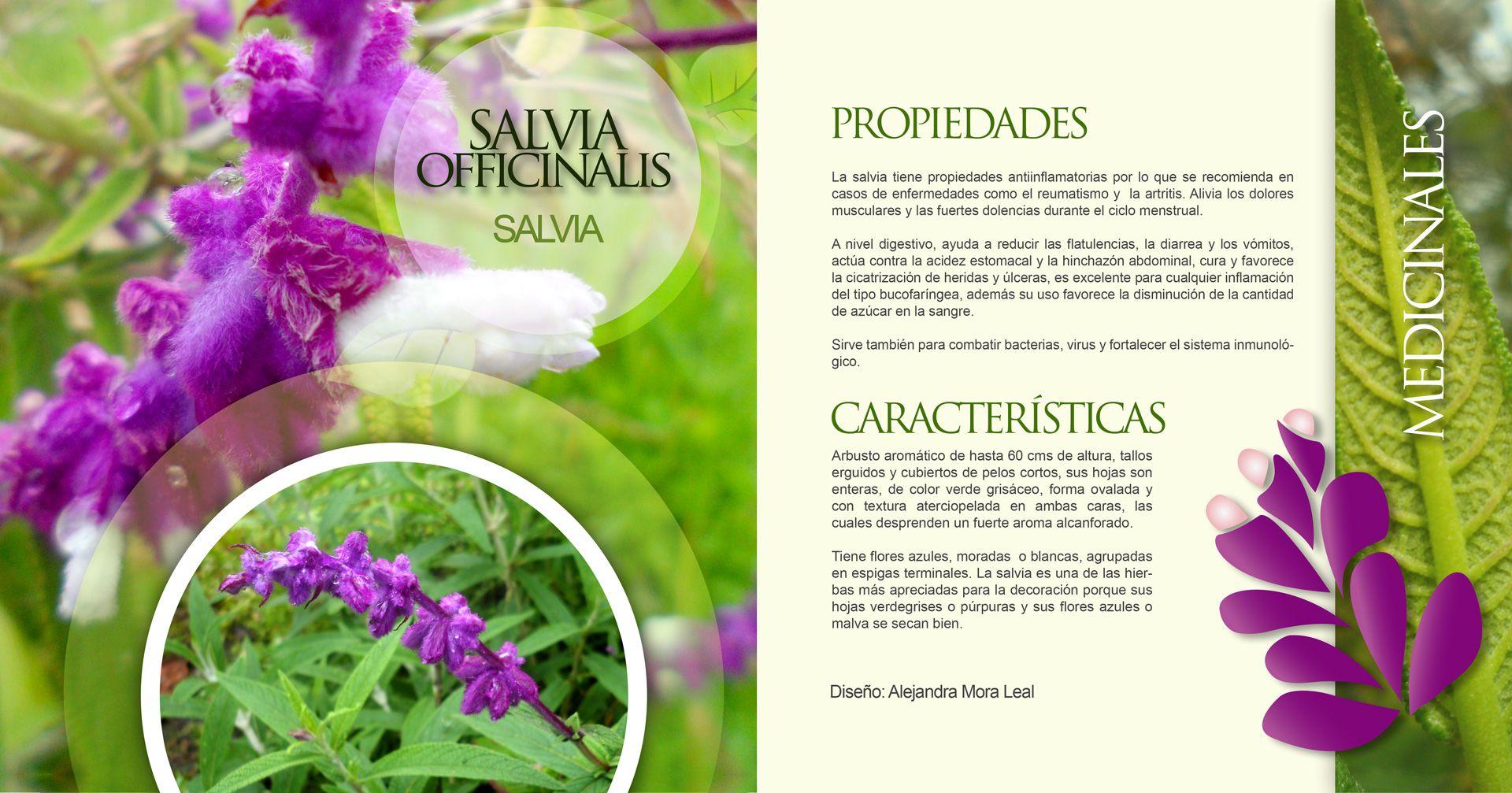 Proyecto Atlas 2014 2 Diseño Alejandra Mora Disenos De Unas Salvia Propiedades Aromas