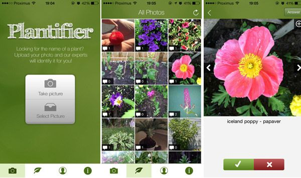 Best Plant Identification Apps for 2020 Plant