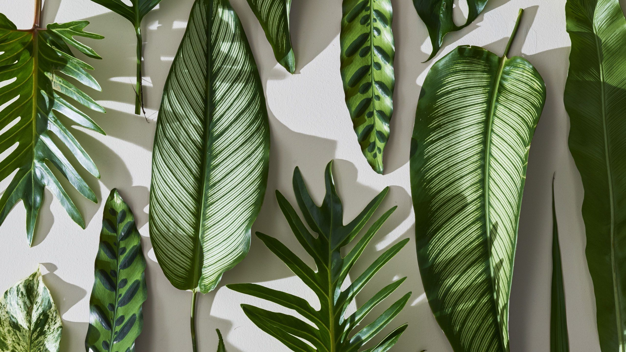 60 tropical leaves desktop wallpapers download at