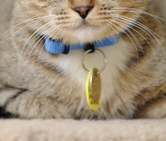 fa6870457be607f63416e69d8fce546c - How To Get My Cat To Wear A Collar