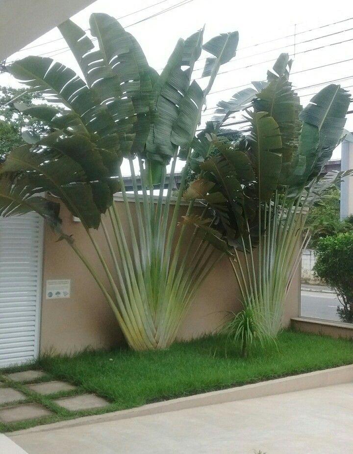 Ideal für die Privatsphäre auf beiden Seiten meines Hinterhofs beiden hinterhofs ideal meines privatsphare seiten is part of Garden -