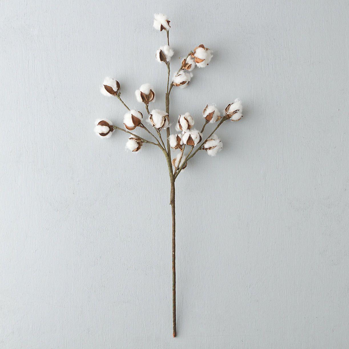 Dried Cotton Stem   4. Loft Visual Displays   Cotton plant ...