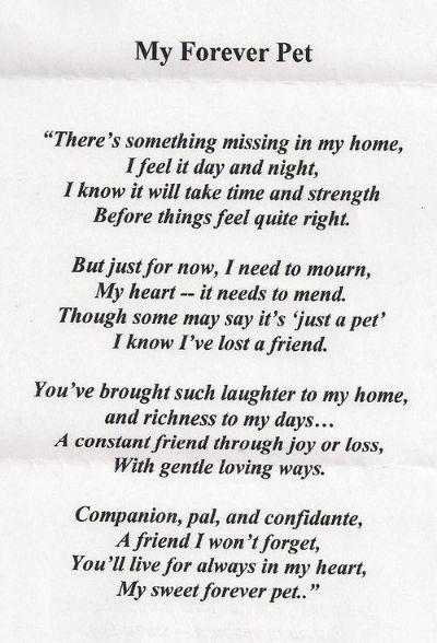 Pin By R On  Cats  In Our Hearts Forever    Dog