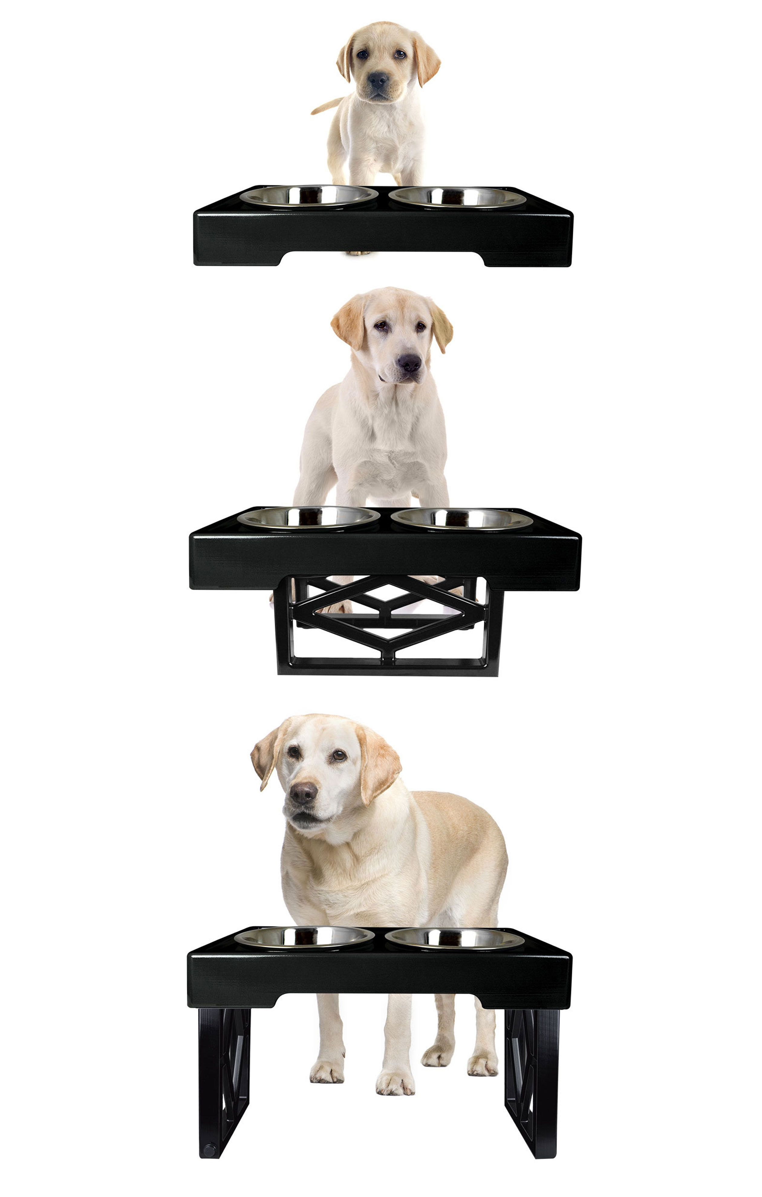 This Adjustable Raised Dog Feeder Grows With Your Pet, Allowing Them To Eat  Comfortably From