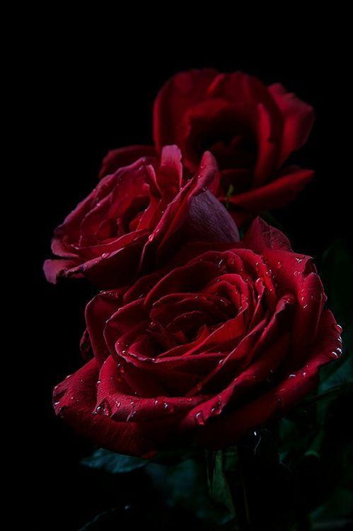 From Imgfave Com Flower Lockscreen Flowers Rose Flower
