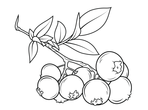 Blueberry branch coloring page from Blueberry category
