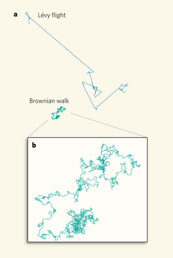 Levy Flight Pattern And Brownian 'random' Walk Meaningful Delectable Flight Patterns Summary